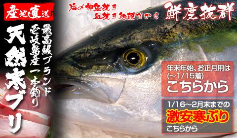 壱岐一本釣り寒ブリ(送料無料)極上の美味しさ!セリ価格で冷凍しないまま生でお届けします