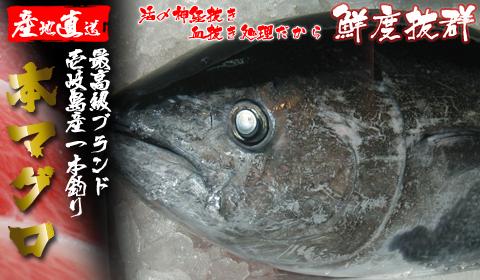 壱岐一本釣りマグロ(送料無料)極上の美味しさ!セリ価格で冷凍しないまま生でお届けします